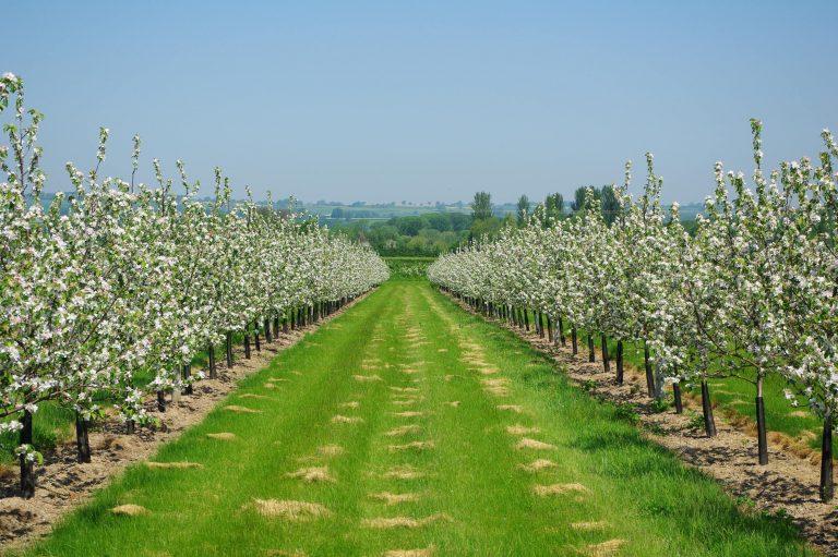 Succesul pe care PNDR îl are în dezvoltarea mediului rural românesc