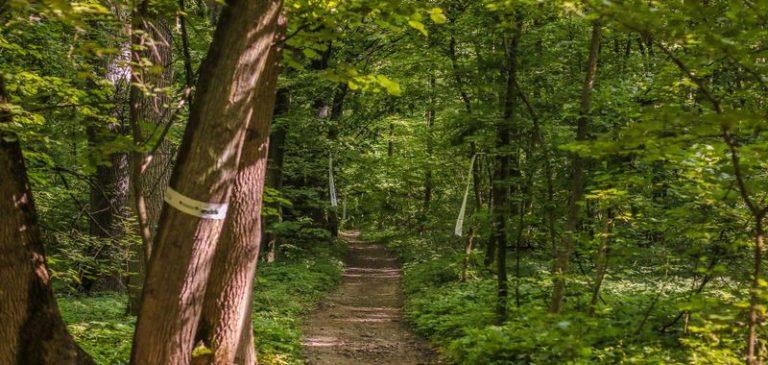 Suprafața pădurilor virgine și cvasi-virgine se va dubla în România