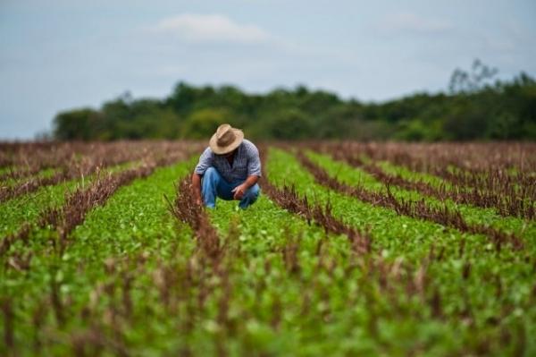 Stimularea producătorilor agricoli care comercializează produsele agricole primare